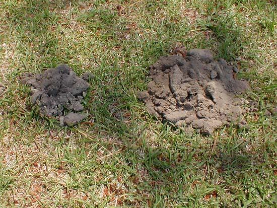 Mole Mound
