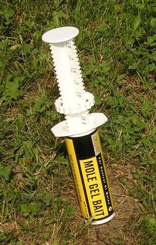 Kauput Mole Bait Syringe in Use